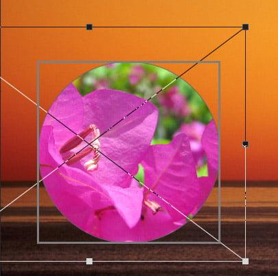Adobe Photoshop CC 2019 Frame Tool
